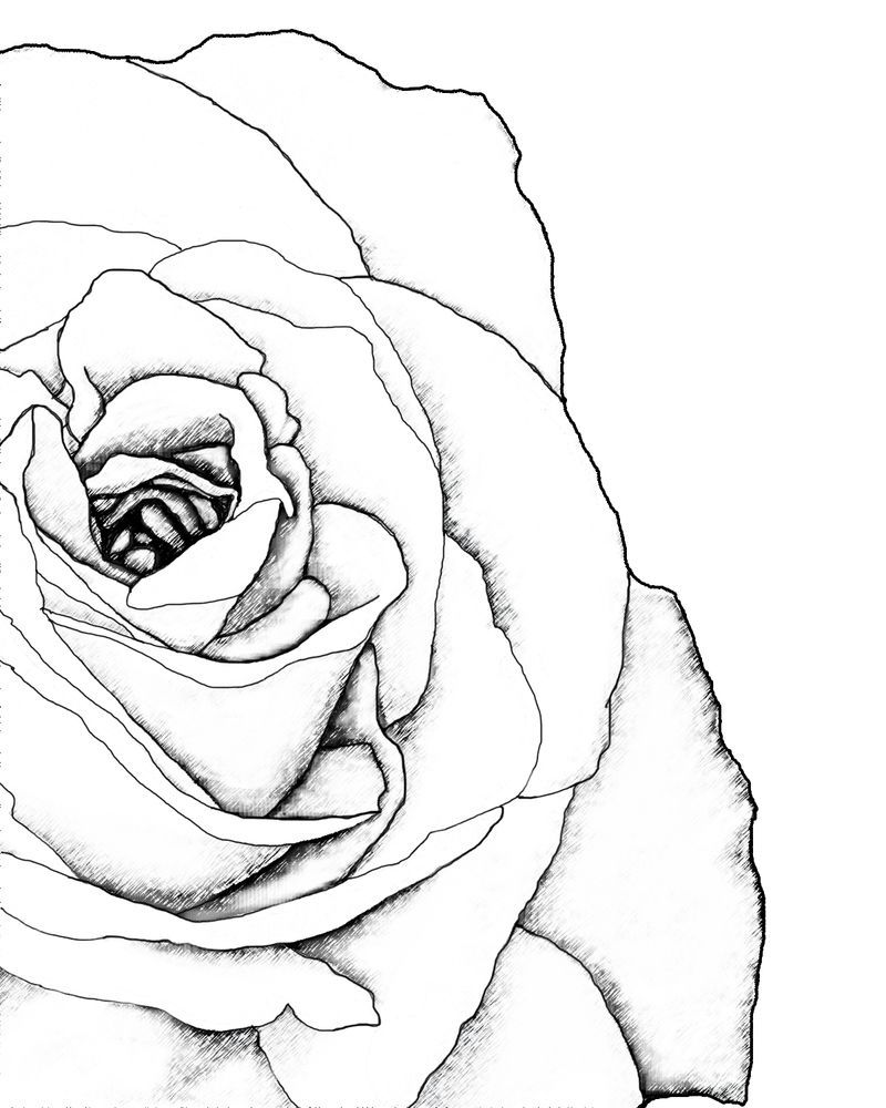 800x1000 Drawn Rose Corner Roses Corner And Rose