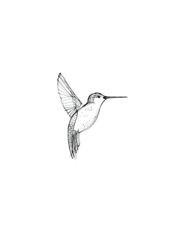 570x738 Hummingbird Drawing, Framed Drawing Art, Hummingbird Art Print