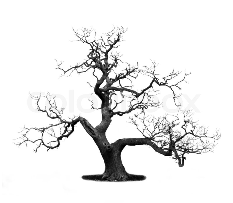 800x700 Drawn Dead Tree Dry Tree