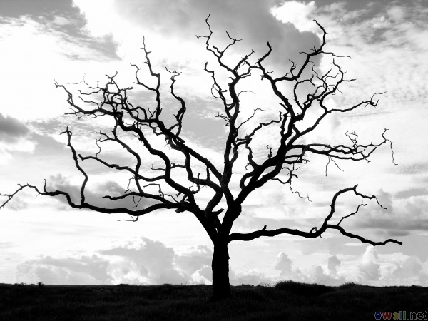 600x450 37 Best Dead Tree Pencil Drawings Images On Pencil