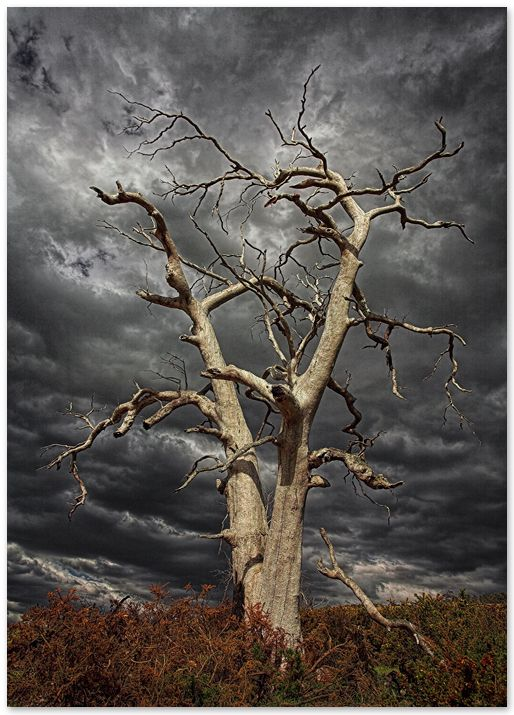 514x715 37 Best Dead Tree Pencil Drawings Images On Pencil
