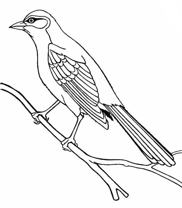 Cuckoo Drawing