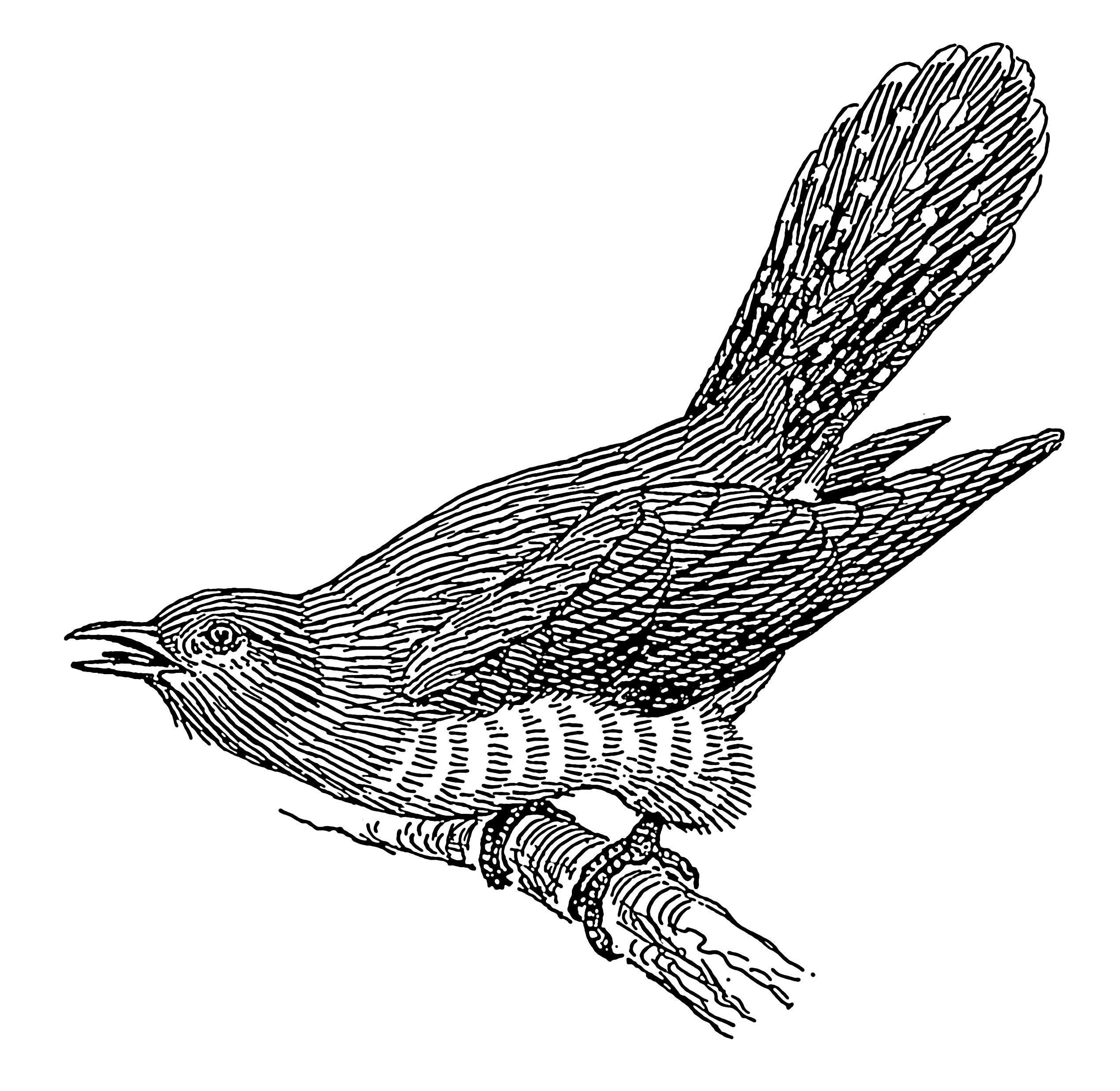 2542x2476 Filecuckoo (Psf).png