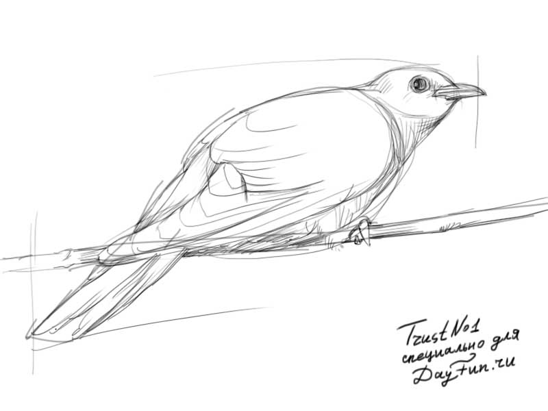 800x600 How To Draw A Cuckoo Step By Step