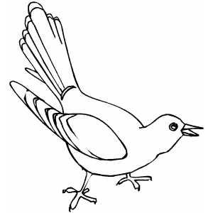300x300 Collection Of Kokila Bird Drawing High Quality, Free