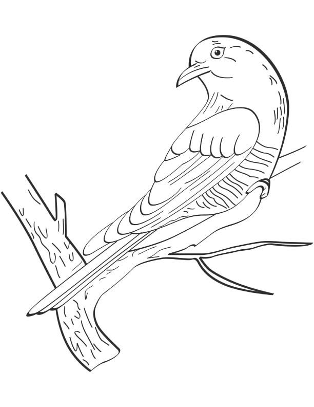 612x792 9 Amazing Cuckoo Coloring Pages For Kids Printable Cuckoo