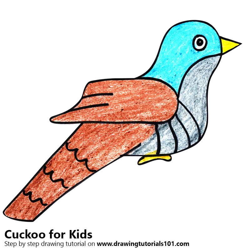 800x800 Learn How To Draw A Cuckoo For Kids (Animals For Kids) Step By