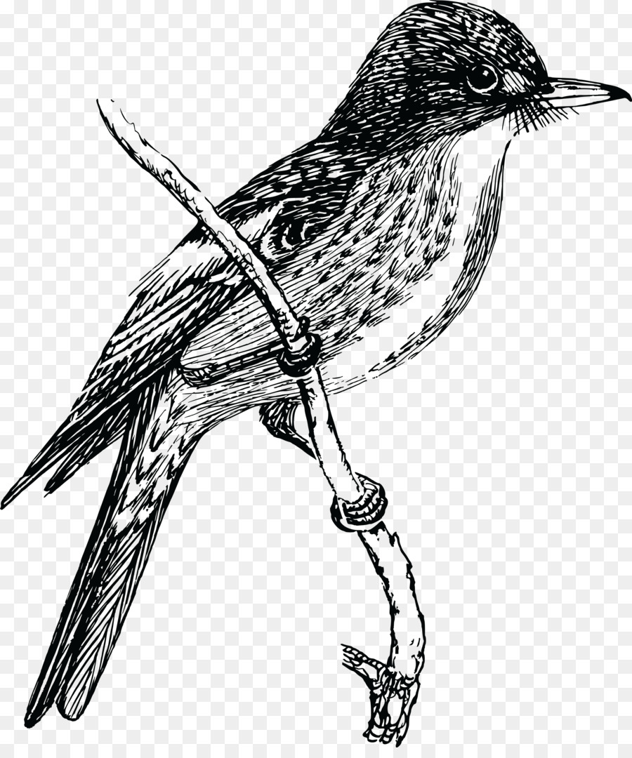 900x1080 Bird Drawing Clip Art