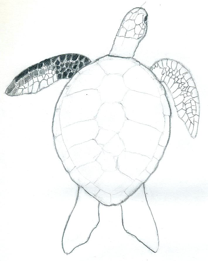 Cute Turtle Drawing Tumblr At Getdrawings Com Free For Personal