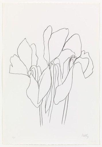 355x512 Ellsworth Kelly. Cyclamen V From Suite Of Plant Lithographs. 1964