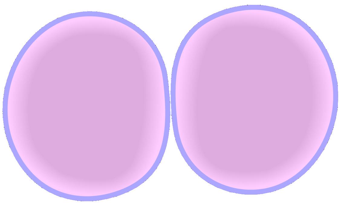 Cytokinesis Drawing At Getdrawings Free For Personal Use