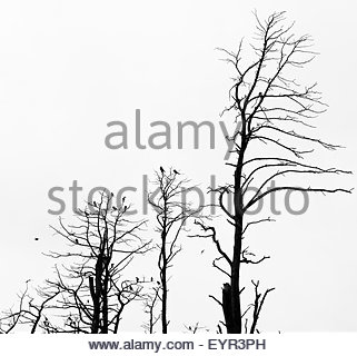 321x320 Forest Of Dead Bare Trees And Dry Grass On The Foreground Stock