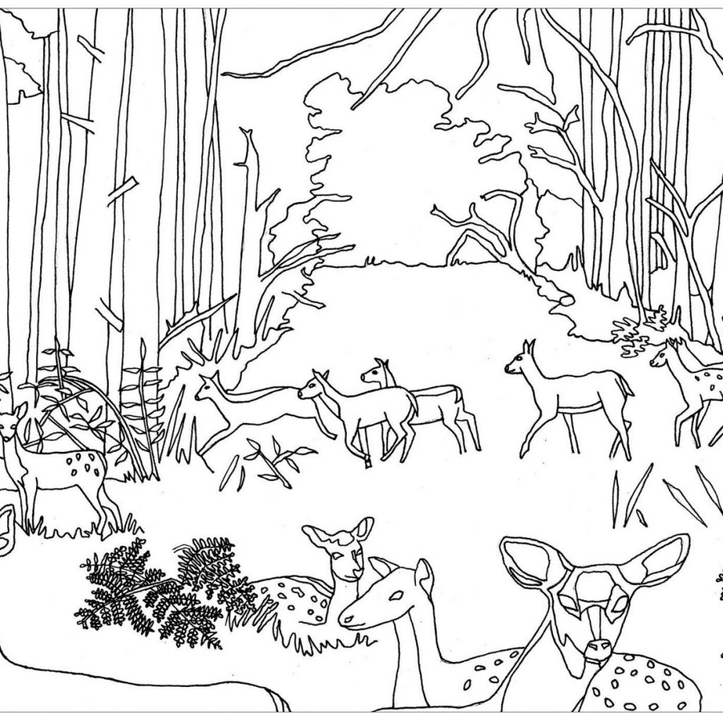 1024x1024 Glamorous Forest Scene Coloring Page Print Color Printable Pages