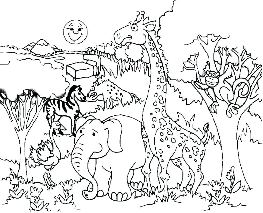 1019x825 Superior Woodland Creatures Coloring Pages Forest Habitat Drawing
