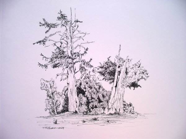 600x450 Drawing Dead Tree In Ink By Tomkilbane