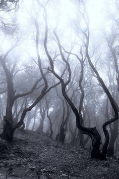 236x354 He Stoodlone In The Misty Forest, Waiting For Miraclewrite