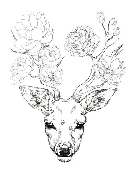 Deer Head Drawing Easy