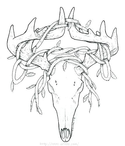 429x500 Deer Head Coloring Pages Deer Head Coloring Pages Deer Head