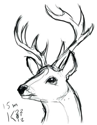 400x517 How To Draw A Deer Easy Easy Drawing How To Draw A Deer Explore