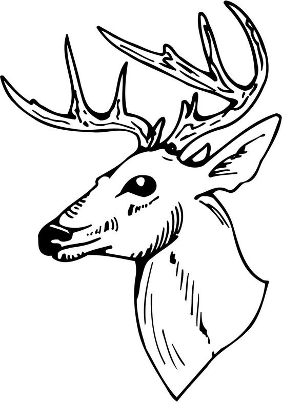 550x784 Collection Of Deer Head Outline Drawing High Quality, Free