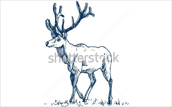 600x374 Free Deer Drawings Amp Designs Free Amp Premium Templates