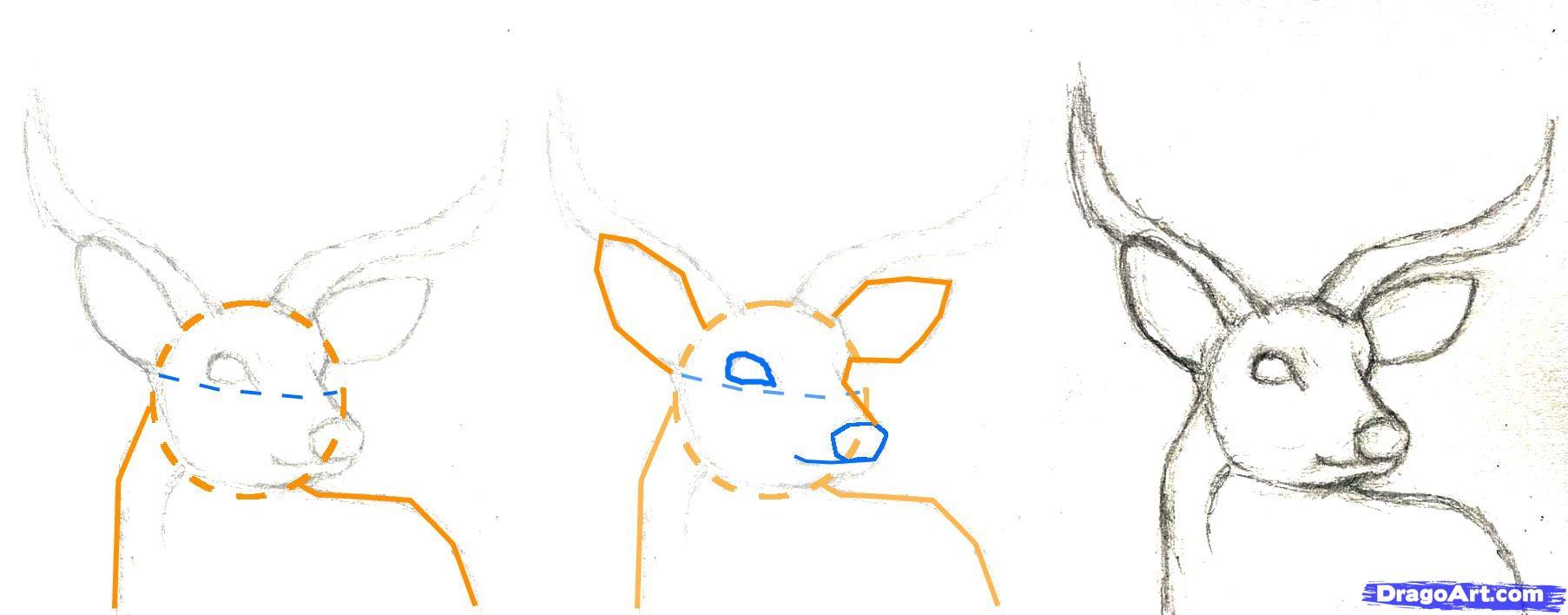 1806x708 How To Draw Deer Head How To Draw A Deer Head, Stepstep, Forest
