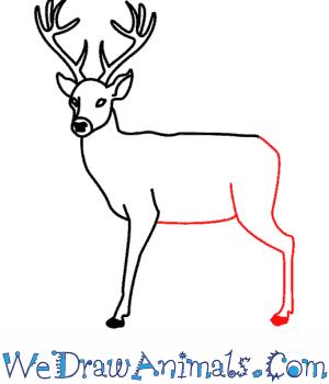 300x350 Deer 09.png