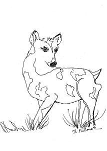 214x300 Deer Drawing Drawings