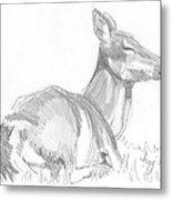 155x180 Deer Lying Down Drawing Drawing By Mike Jory