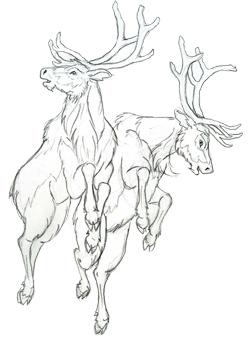 250x347 The Deer