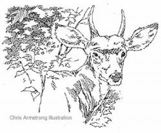 320x265 The Meaning Of Deer Hunting Hunting Truth In Life Deer Hunting