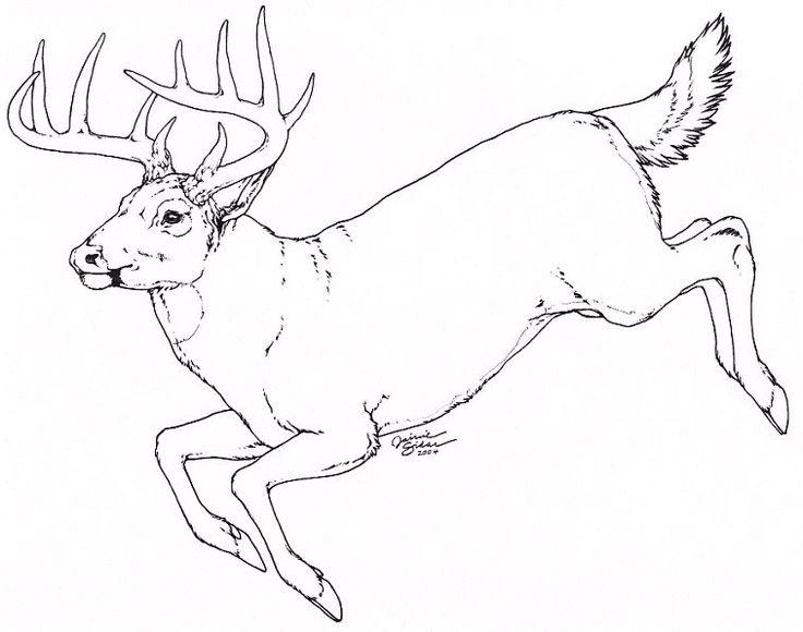 736x580 57 Best Deer Photographs Images On Deer Hunting, Elk