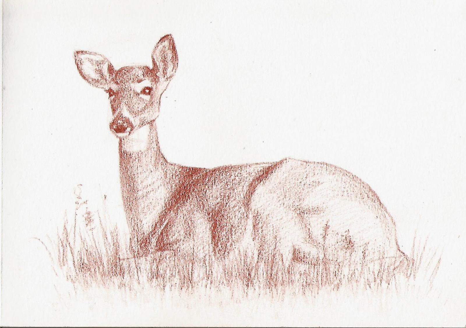 1600x1126 Collection Of Deer Lying Down Drawing High Quality, Free