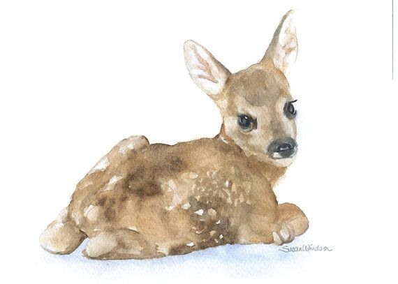 570x407 617 Best Deer Images On Deer, Animal Pictures And Baby