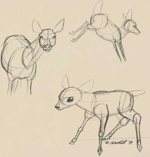 482x504 Trish Babbles The Secret Life Of Deer Sketches