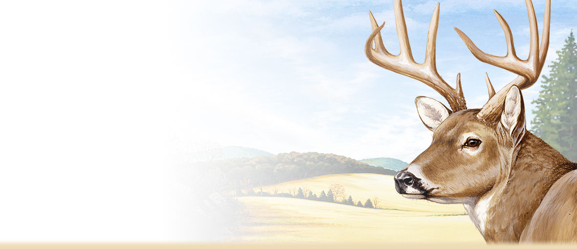 1180x509 Whitetail Deer Facts, Information, And Photos