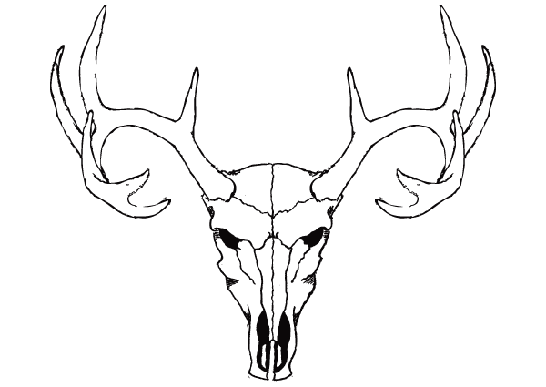 Deer Skull Drawing Easy