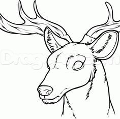 236x234 How To Draw A Deer Head, Step By Step, Forest Animals, Animals