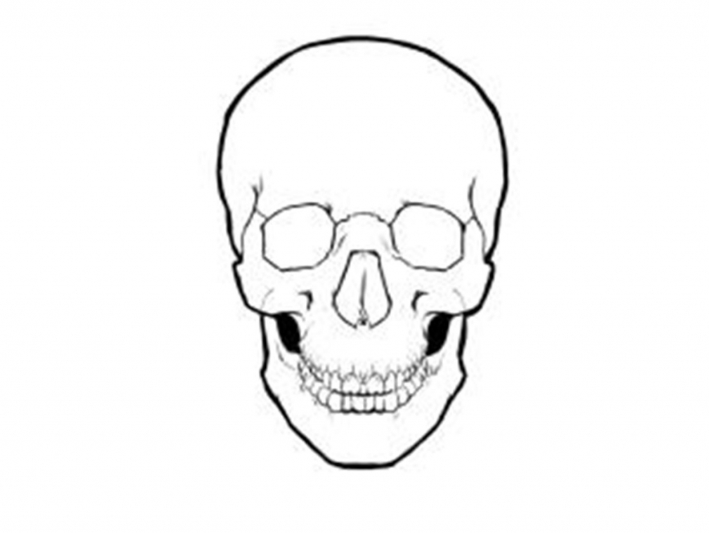 1024x771 Simple Skull Drawing Learn How To Draw A Skull