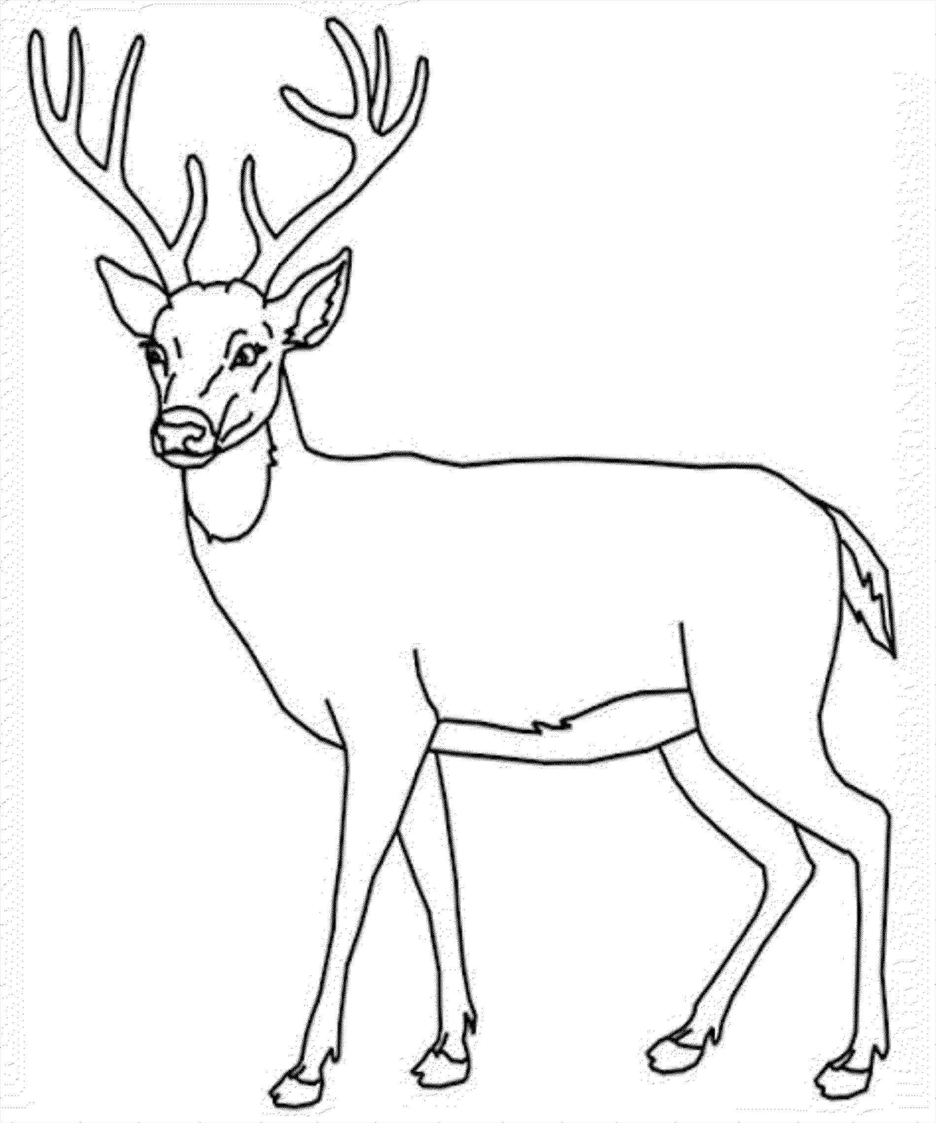 1899x2277 Easy Deer Buck Drawings