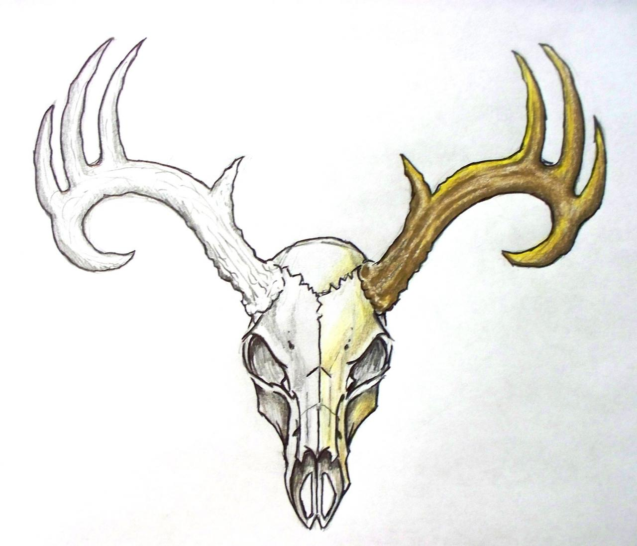 1280x1097 Collection Of Deer Skull Drawing Tattoo High Quality, Free