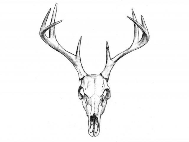 640x480 Cool Skull Drawing Free Download Clip Art