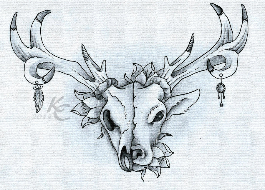 900x646 Photos Deer Skull Drawing,