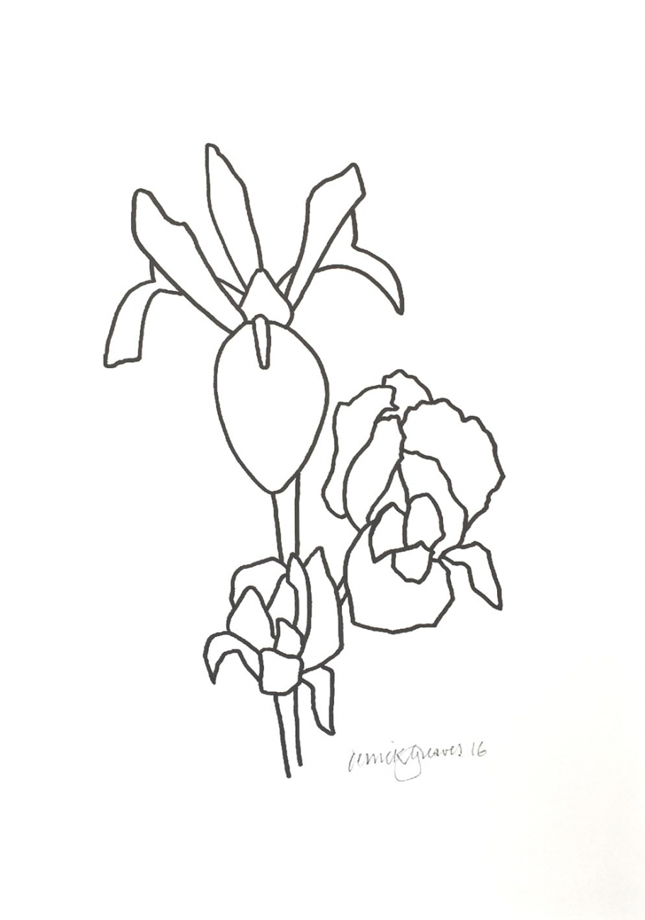 911x1300 Iris Drawing 08