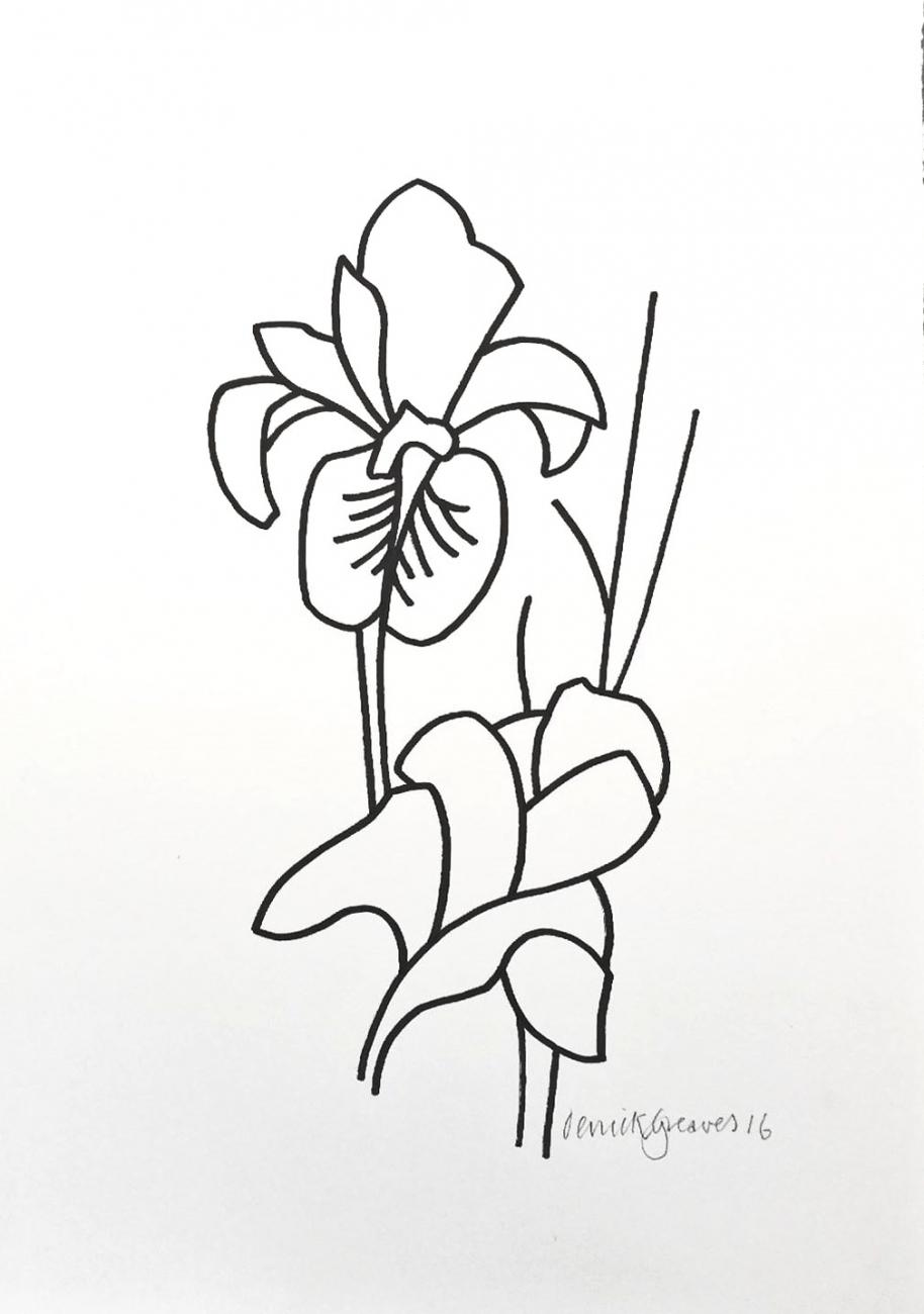 914x1300 Iris Drawing 09