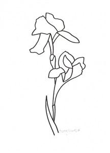 216x300 Derrick Greaves Iris Drawings On Artnet
