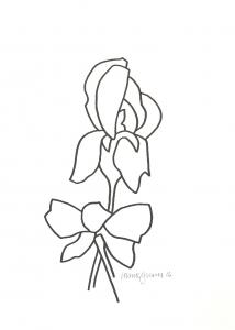 214x300 Derrick Greaves. Iris Drawings