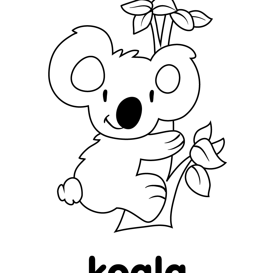 905x900 Limited Koala Pictures To Color How Draw A Discovery Channel