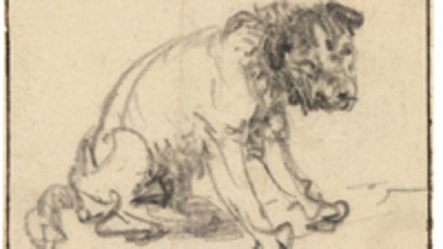 864x486 Dog Drawing By Rembrandt Discovery Dear Kitty. Some Blog