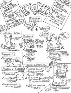 235x305 Great Dna Handout For Biology And Ap Biology Students. Teacher